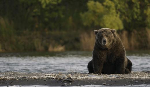 キャンプ中もしもクマと遭遇してしまった時の対処法や予防アイテム